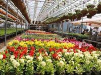صادرات گل نیازمند حمایت دولتی