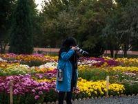 گلهای داوودی تهران +تصاویر