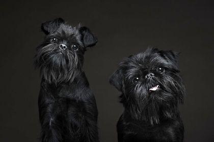 عکاسی پرتره از سگها +تصاویر