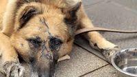 حیوان آزاری وحشتناک در آذربایجان شرقی +عکس