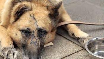 مقابله با حیوانآزاری شاید در مجلس بعدی!