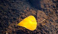 پاییز، پادشاه فصلها +تصاویر