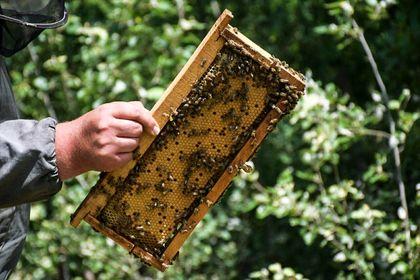 معروفترین عسل ایران اینجا تولید میشود +تصاویر
