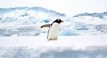 سفری به قطب جنوب +تصاویر