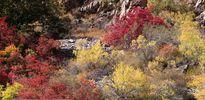 پاییز هزار رنگ در هندوستان ایران + عکس