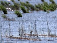 اختصاص ۹۲۶میلیارد تومان برای جبران خسارت سیل به کشاورزی خوزستان