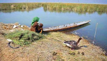 مرگ آبزیان شادگان در آلودگی و کمآبی