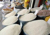علت واردات برنج در فصل برداشت برخی معذورات کشور است