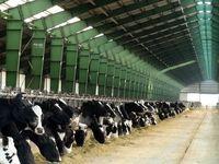 زمینههای گرانی گوشت و لبنیات