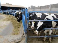 هشدار درباره کمبود شیر در سال آینده