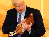 یک هفته نخست وزیری بوریس جانسون +تصاویر