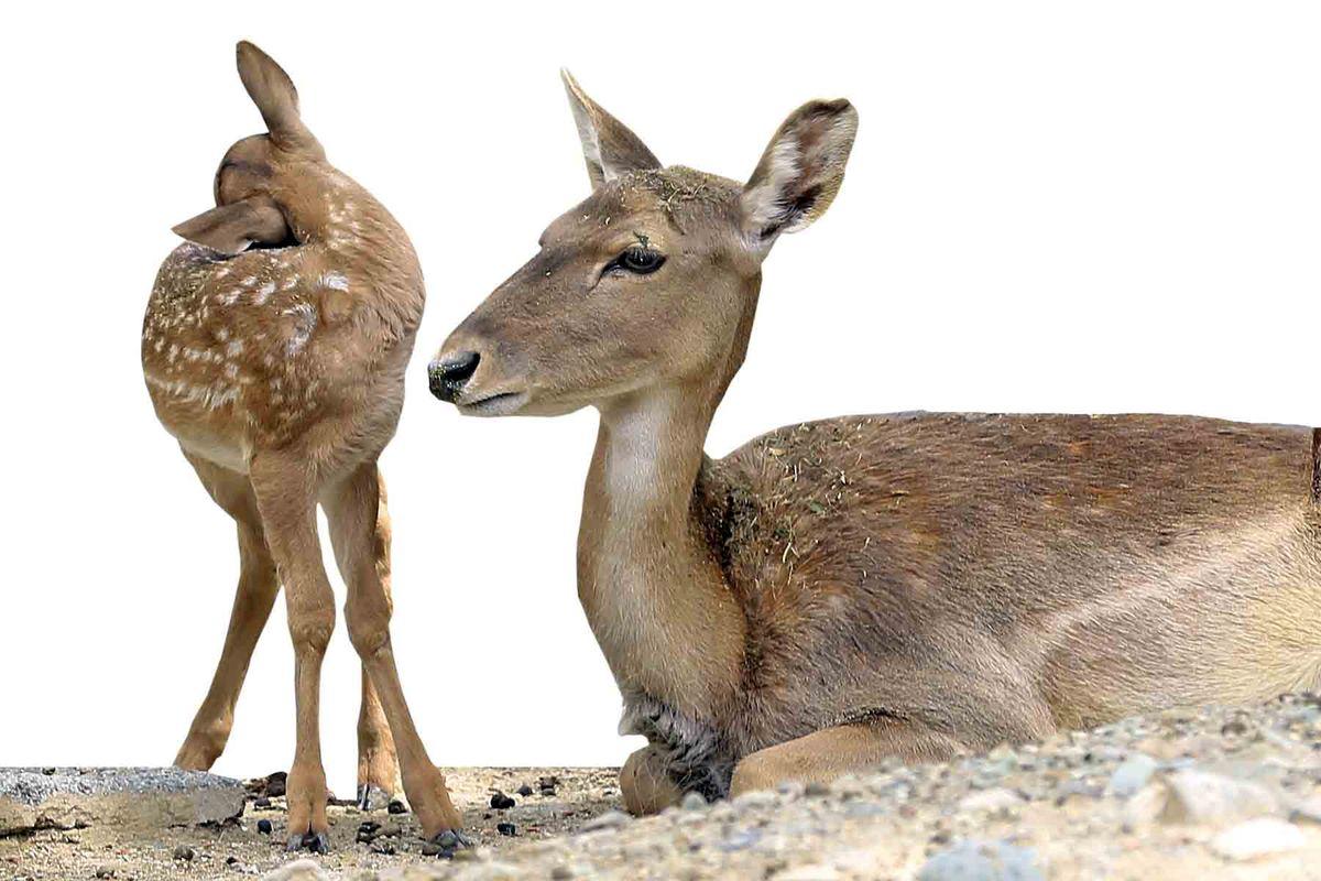 حال و هوای ساکنان بزرگترین باغوحش ایران در دوران کرونا