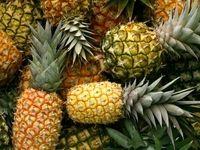 رسوب 300تن محصول آناناس در گمرک