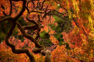 طبیعت پاییزی در جهان