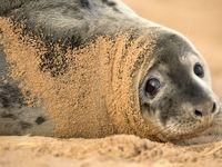 برترین عکسهای دنیای حیوانات در سال ۲۰۱۶
