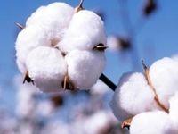کاهش ۵درصدی تعرفه واردات مواد اولیه در صنعت نساجی