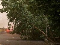 اعلام خسارات اولیه طوفان در تهران