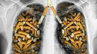 سیگاری ها و خطر ابتلا به ۱۲ نوع سرطان