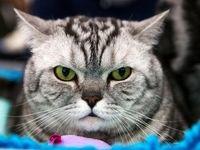 حراج پرشین در پرورشگاه گربهها؛ فقط ۴۵۰هزار تومان