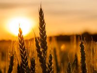 عضو کمیسیون کشاورزی: وزارت جهاد کشاورزی مسئول است