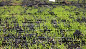 توصیههای هواشناسی کشاورزی برای روزهای آغازین تابستان