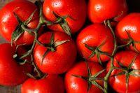 چرا عراق محموله صادراتی گوجه ایران را برگشت زد؟