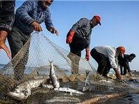 مهلت صید ماهیان استخوانی دریای خزر تمدید شد