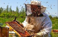 عسل تقلبی کیلویی ۱۱۰هزار تومان!