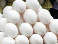 اختلاف قیمت ۱۰هزار تومانی در بازار تخم مرغ!