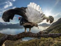 برندگان مسابقه جهانی big picture +تصاویر