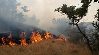 جنگل کوهستانی مرزن آباد چالوس دچار آتش سوزی شد