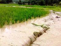 غرامت بیمه با حجم خسارت در حوزه کشاورزی همخوانى ندارد