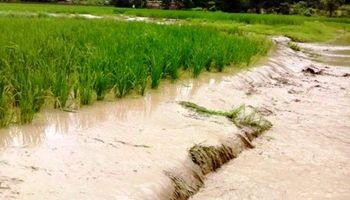 خسارت سیل به کشاورزی جبران میشود