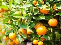 این میوه را با پوست بخورید و معجزه آن را دریابید