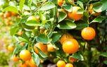 میوه نارنج سرد است یا گرم؟