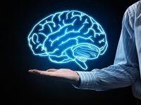 کشف تونلهای مخفی در مغز +عکس