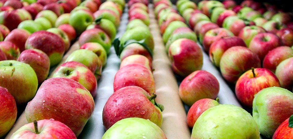 مصرف زیاد سم در خاستگاه تولید سیب ایران