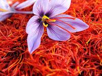 ارزیابی اشتباه بازار زعفران ایران/ هر کیلو گرم زعفران ۸۰۰تا ۱۲۰۰یورو به فروش رفت