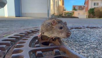 تلاش ۹آتش نشان برای نجات جان یک موش! +تصاویر