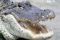 کشف تمساح از اروند رود +عکس