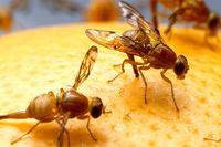 از بین بردن باکتریهای مقاوم در برابر دارو با الهام از بال مگس!