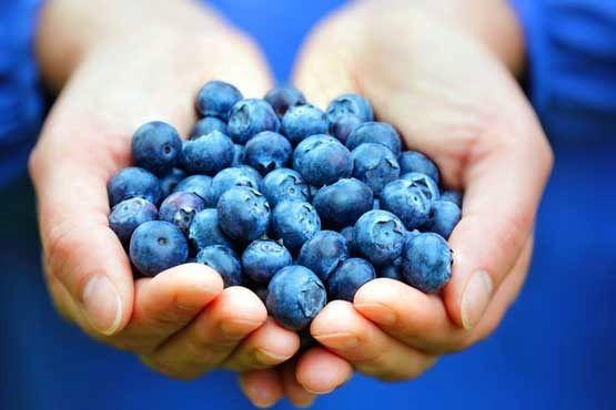 مصرف روزانه بلوبری ریسک بیماری قلبی را کاهش میدهد