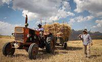 هشدار نسبت به افت تولید و کاهش ضریب خودکفایی غذایی کشور/ کشاورزان در تنگنای معیشتی