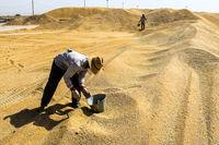 ۳۵۰۰ میلیارد تومان یارانه به بخش کشاورزی اختصاص یافت