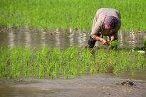 بررسی وضعیت محصولات تراریخته در کمیسیون کشاورزی مجلس