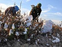 170هزار میلیارد ریال به اشتغال عشایر و روستاییان اختصاص یافت