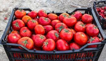 بازی با گوجه!