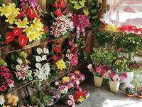 قیمت گل و گیاه در ایام نوروز تغییر نکرد