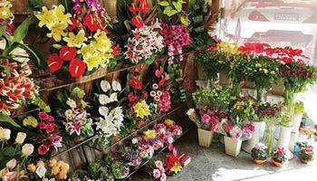 فاصله ۲.۵برابری قیمت گل از بازار تا گل فروشیها!