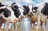 تولید شیر و لبنیات در تنگنای بودجه